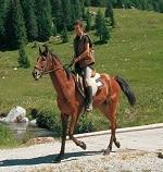 passeggiata a cavallo - Copia