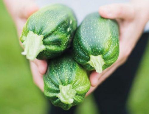 Pesto di zucchine: la ricetta della Dott.ssa Clotilde Tucci, dietista di LILT Biella