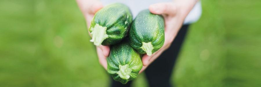 Pesto di zucchine - Ricette Salutari LILT Biella